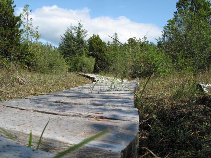 Der Ahousaht Wild Side Heritage Trail wird seit 2008 für Besucher restauriert und renaturalisiert.