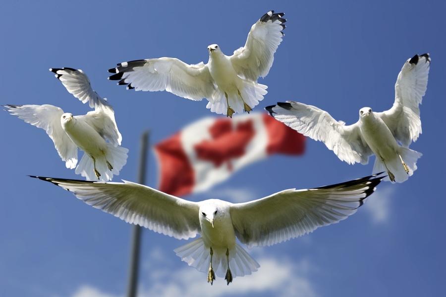 Kanada-Rundreisen bieten unvergessliche Eindrücke über Provinz- und Territorialgrenzen hinweg.